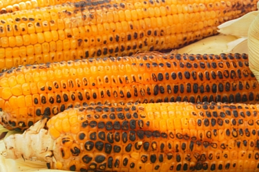 May Two-Four Corn-on-the-cob Food